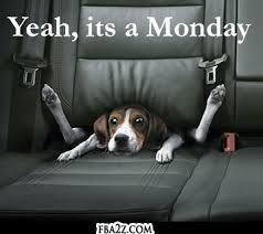 quotes-dog-seat-mondays